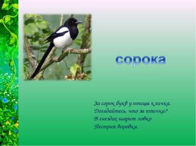 За сорок букв у птицы кличка, Догадайтесь, что за птичка? В гнездах шарит лов...