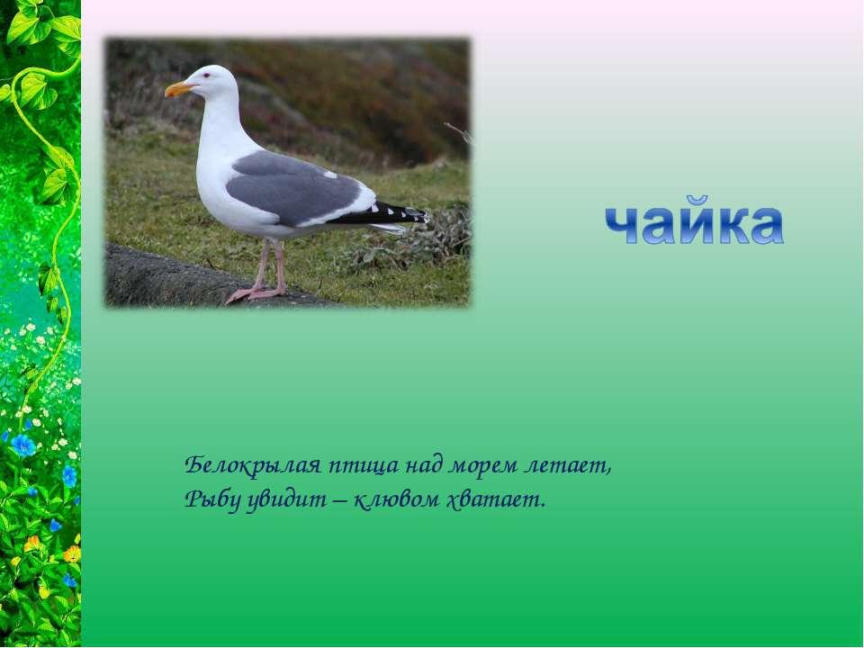Белокрылая птица над морем летает, Рыбу увидит – клювом хватает.