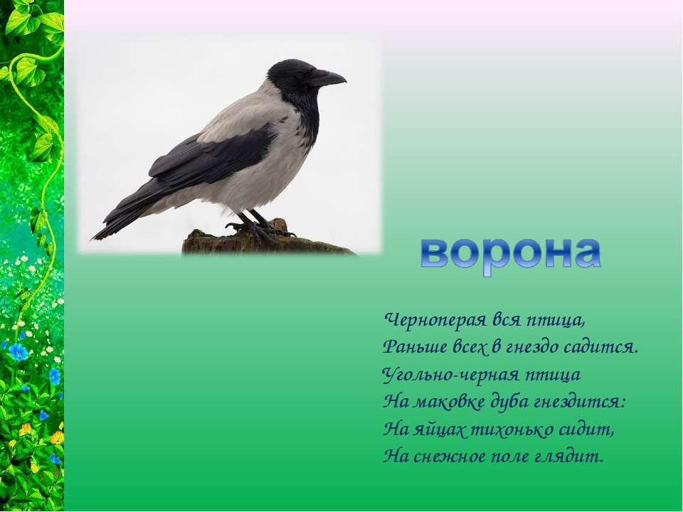 Черноперая вся птица, Раньше всех в гнездо садится. Угольно-черная птица На м...