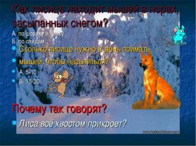 Как лисица находит мышей в норах, засыпанных снегом? А. по шороху и писку Б. ...