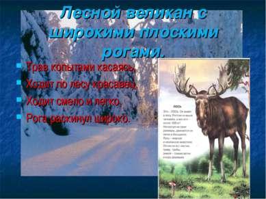 Лесной великан с широкими плоскими рогами. Трав копытами касаясь, Ходит по ле...