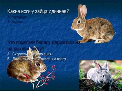 Какие ноги у зайца длиннее? А. передние Б. задние Что помогает беляку держать...