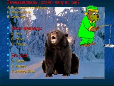 Зачем медведь «сосёт» лапу во сне? А. Высасывает из неё жир Б. Чешутся лапы В...