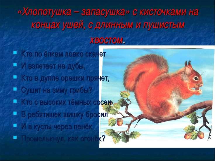 «Хлопотушка – запасушка» с кисточками на концах ушей, с длинным и пушистым хв...