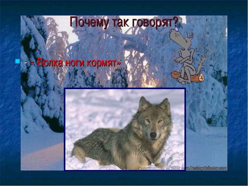 Почему так говорят? - « Волка ноги кормят»
