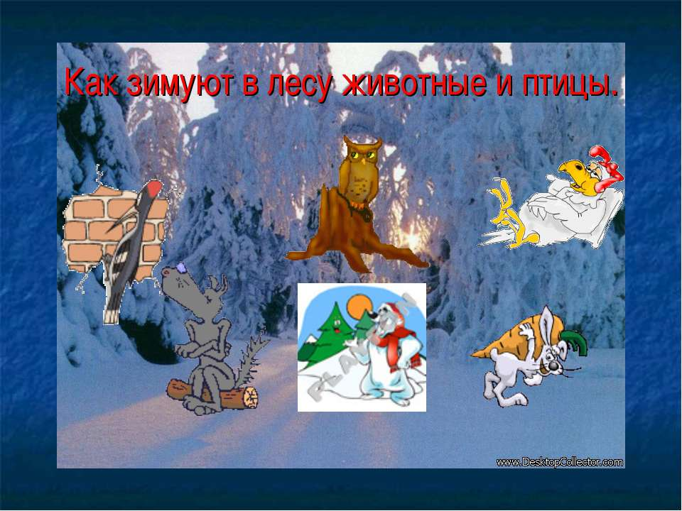 Как зимуют в лесу животные и птицы.