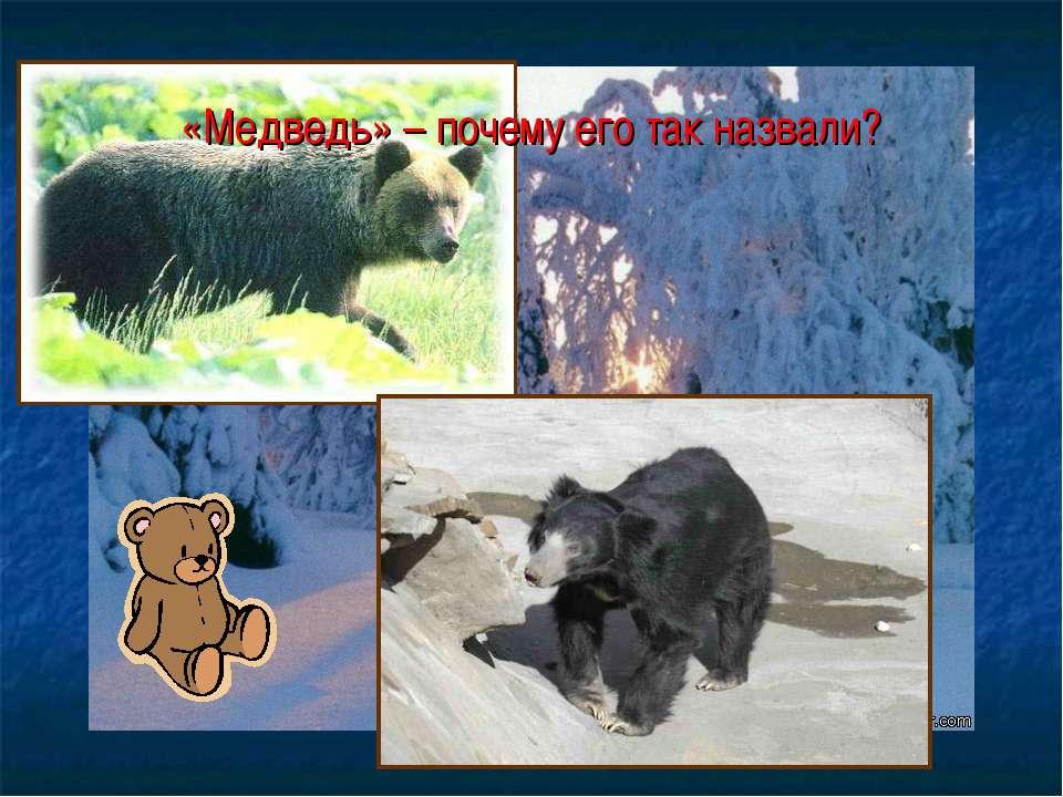 «Медведь» – почему его так назвали?