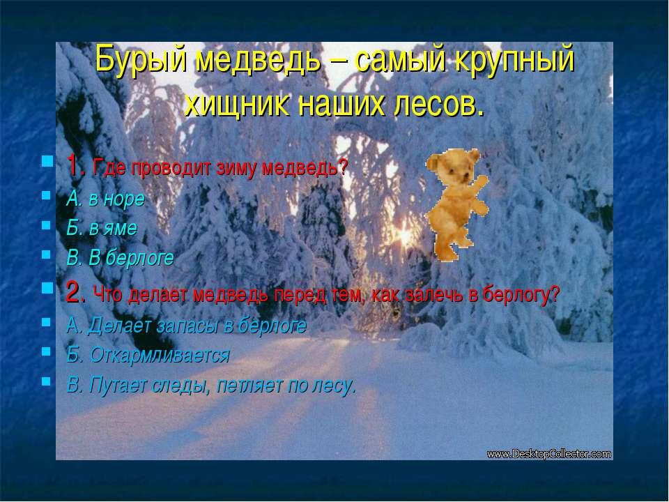 Бурый медведь – самый крупный хищник наших лесов. 1. Где проводит зиму медвед...