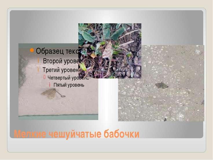 Мелкие чешуйчатые бабочки