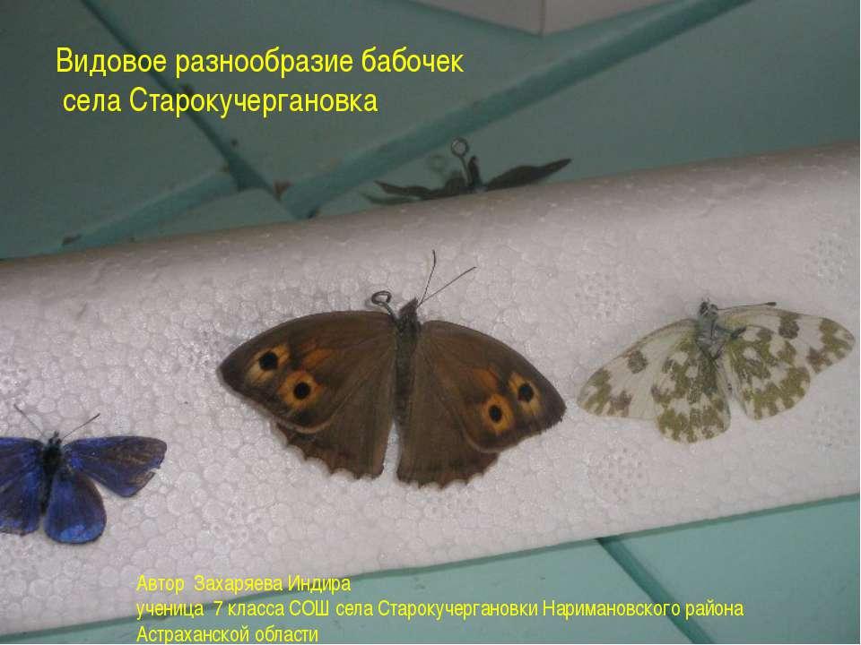 Видовое разнообразие бабочек села Старокучергановка 2010 год Видовое разнообр...