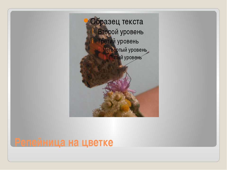 Репейница на цветке