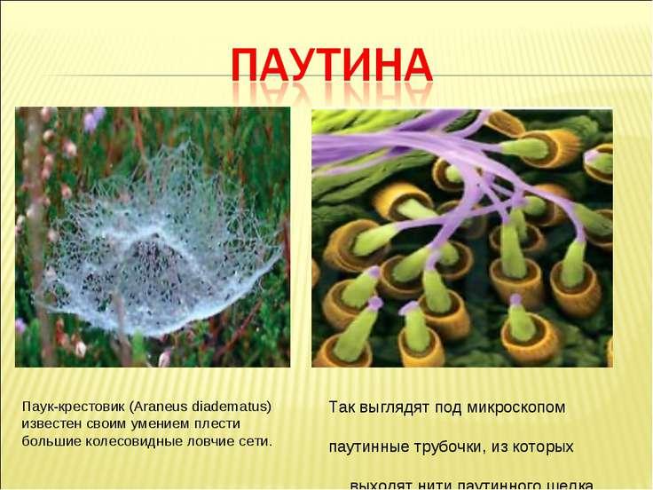 Паук-крестовик (Araneus diadematus) известен своим умением плести большие кол...