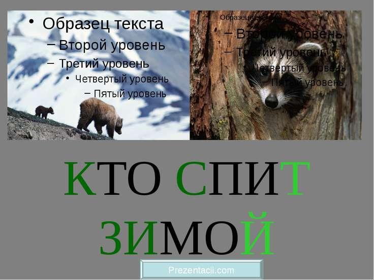 КТО СПИТ ЗИМОЙ Prezentacii.com