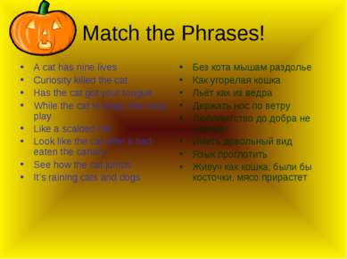 Match the Phrases! A cat has nine lives Curiosity killed the cat Has the cat ...