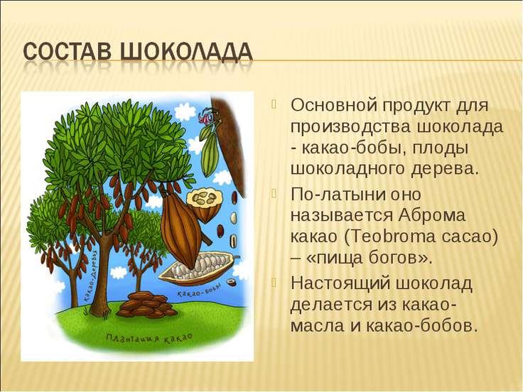 Основной продукт для производства шоколада - какао-бобы, плоды шоколадного де...
