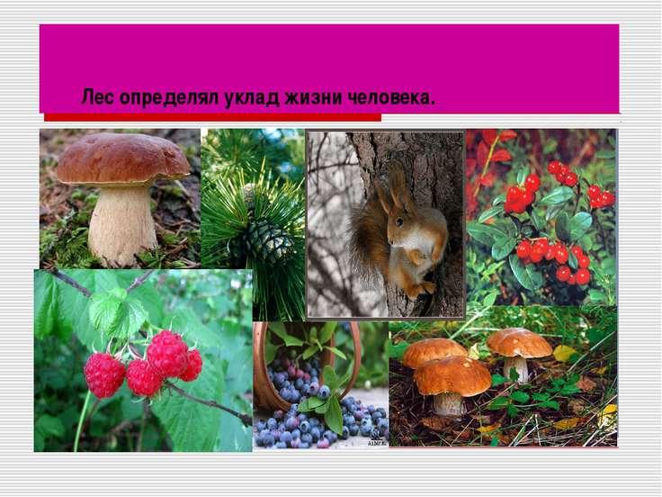 Лес определял уклад жизни человека.