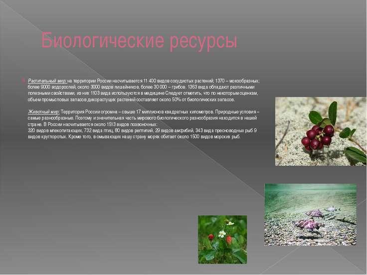 Биологические ресурсы Растительный мир: на территории России насчитывается 11...