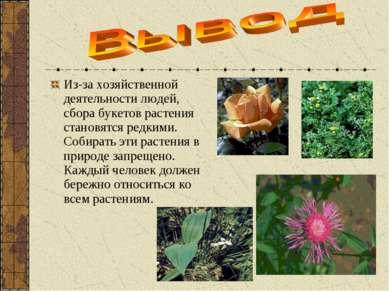 Из-за хозяйственной деятельности людей, сбора букетов растения становятся ред...