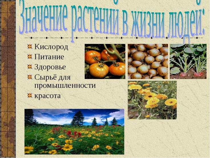 Кислород Питание Здоровье Сырьё для промышленности красота