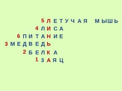 3 А Я Ц Б Е Л К А М Е Д В Е Д Ь Л И С А Л Е Т У Ч А Я М Ы Ш Ь П И Т А Н И Е 5...