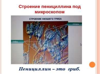 Строение пенициллина под микроскопом Пенициллин – это гриб.