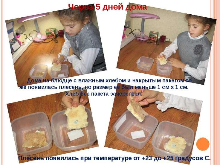 Дома на блюдце с влажным хлебом и накрытым пакетом то же появилась плесень, н...