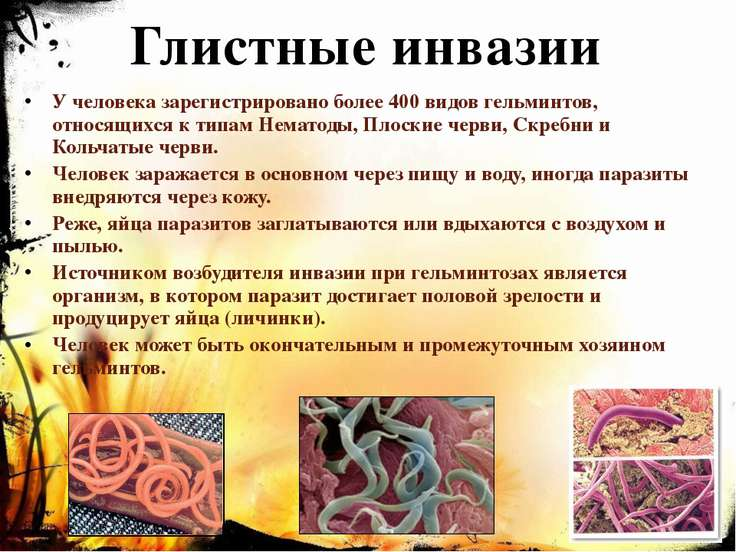 Глистные инвазии У человека зарегистрировано более 400 видов гельминтов, отно...