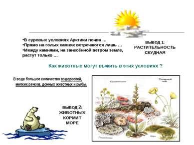 Как животные могут выжить в этих условиях ? В суровых условиях Арктики почва ...
