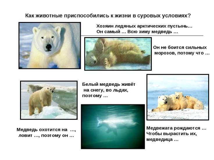 Как животные приспособились к жизни в суровых условиях? Белый медведь живёт н...