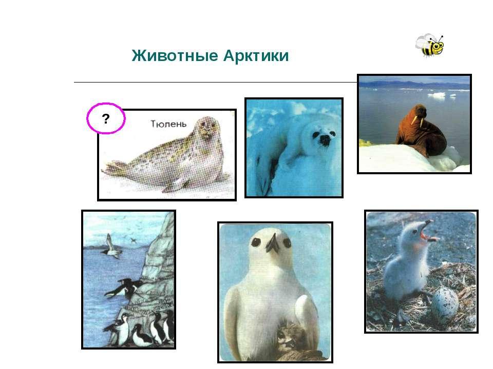 Животные Арктики ?