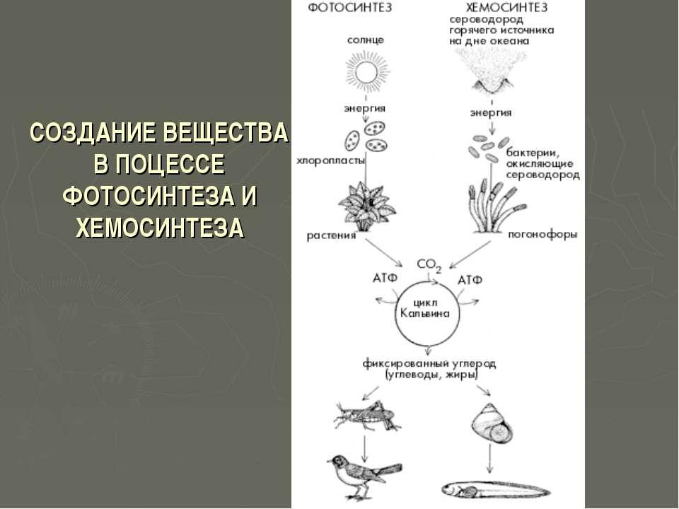 СОЗДАНИЕ ВЕЩЕСТВА В ПОЦЕССЕ ФОТОСИНТЕЗА И ХЕМОСИНТЕЗА