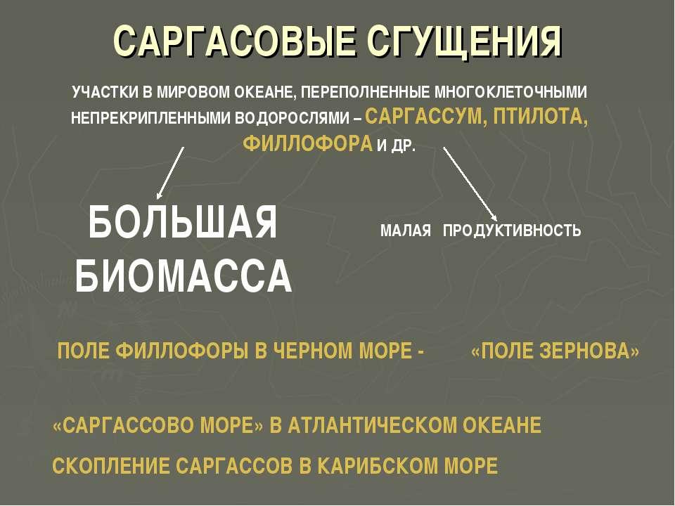 САРГАСОВЫЕ СГУЩЕНИЯ УЧАСТКИ В МИРОВОМ ОКЕАНЕ, ПЕРЕПОЛНЕННЫЕ МНОГОКЛЕТОЧНЫМИ Н...