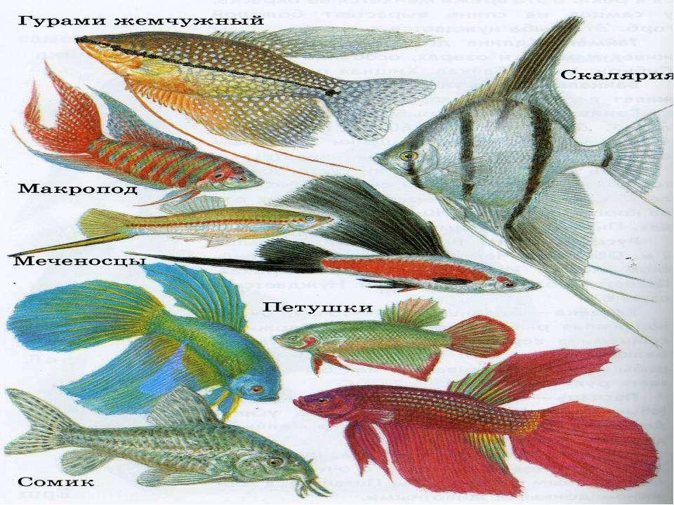 Разнообразие аквариумных рыб