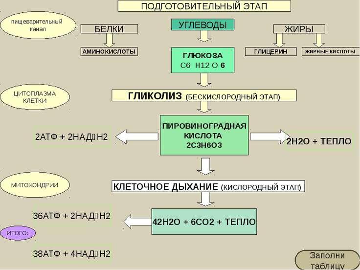 У прокариот клеточное дыхание происходит на впячиваниях плазматической мембра...