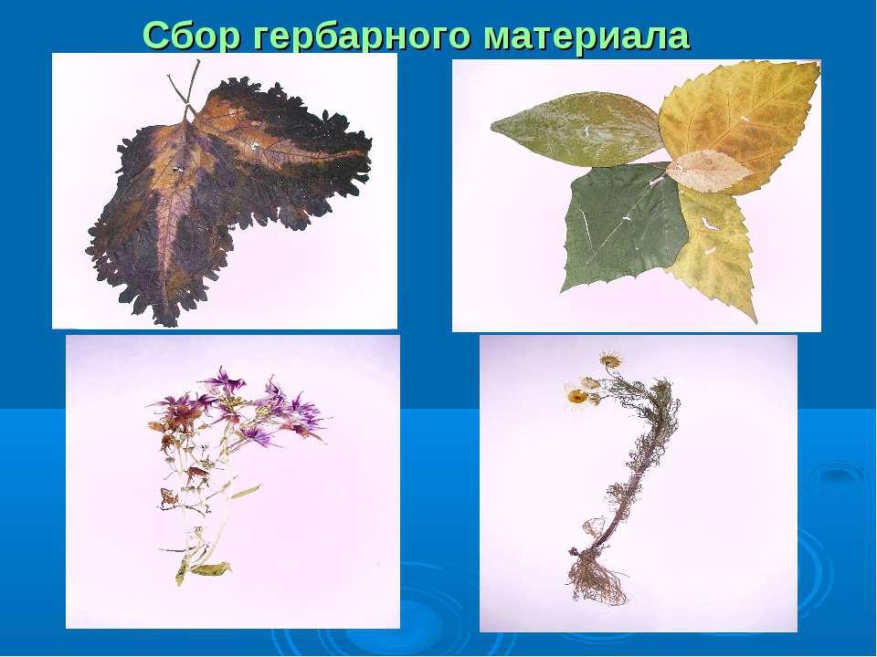 Сбор гербарного материала