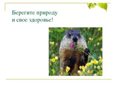 Берегите природу и свое здоровье!