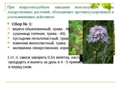 При неврозоподобном заикании используются сборы лекарственных растений, облад...