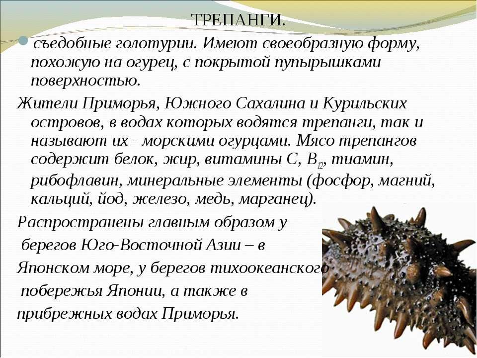 ТРЕПАНГИ. съедобные голотурии. Имеют своеобразную форму, похожую на огурец, с...