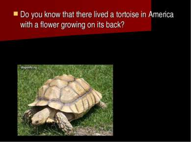 Do you know that there lived a tortoise in America with a flower growing on i...
