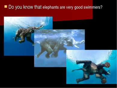 Do you know that elephants are very good swimmers?
