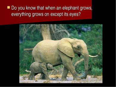 Do you know that when an elephant grows, everything grows on except its eyes?