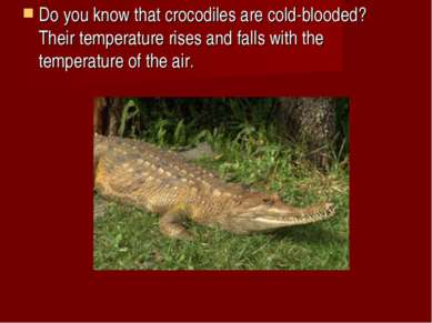 Do you know that crocodiles are cold-blooded? Their temperature rises and fal...