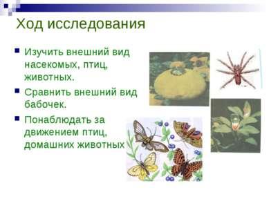 Ход исследования Изучить внешний вид насекомых, птиц, животных. Сравнить внеш...