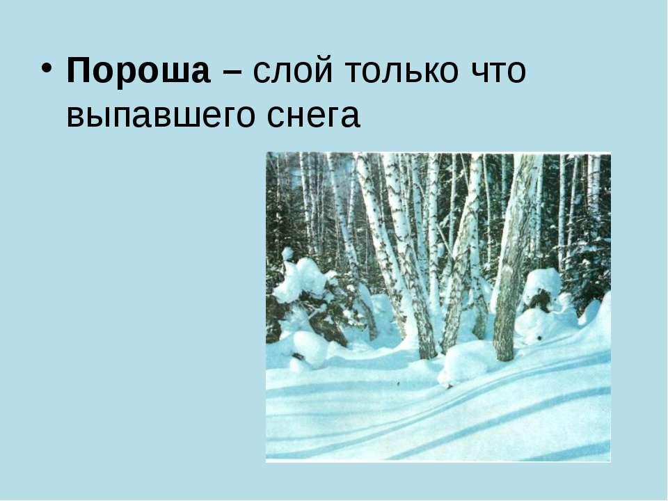 Пороша – слой только что выпавшего снега