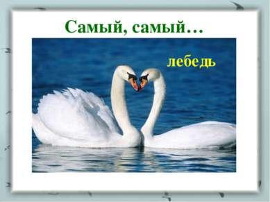 Самый, самый… лебедь
