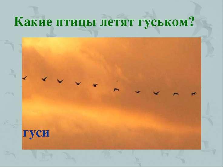 Какие птицы летят гуськом? гуси