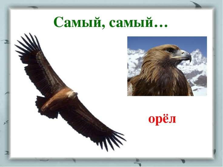 Самый, самый… орёл