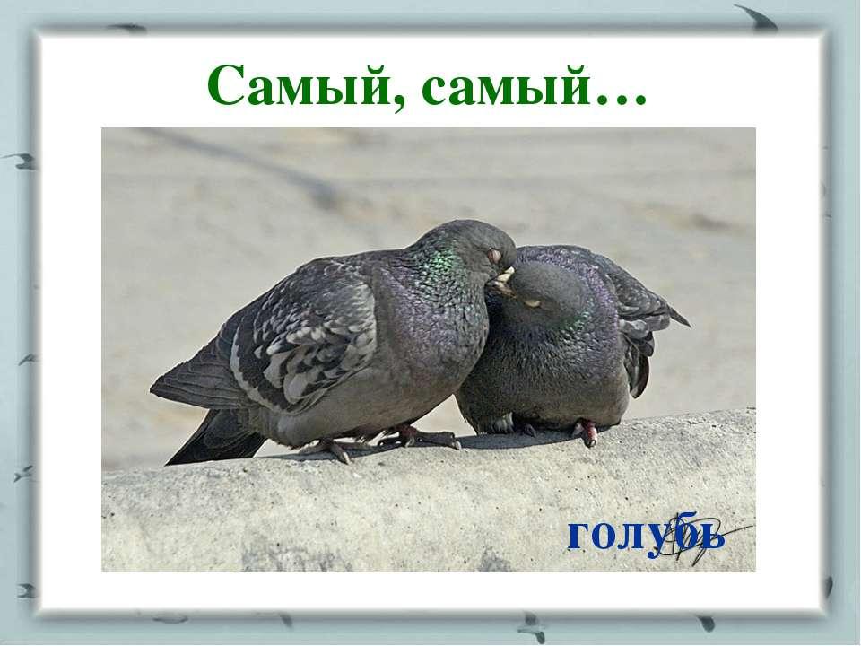 Самый, самый… голубь