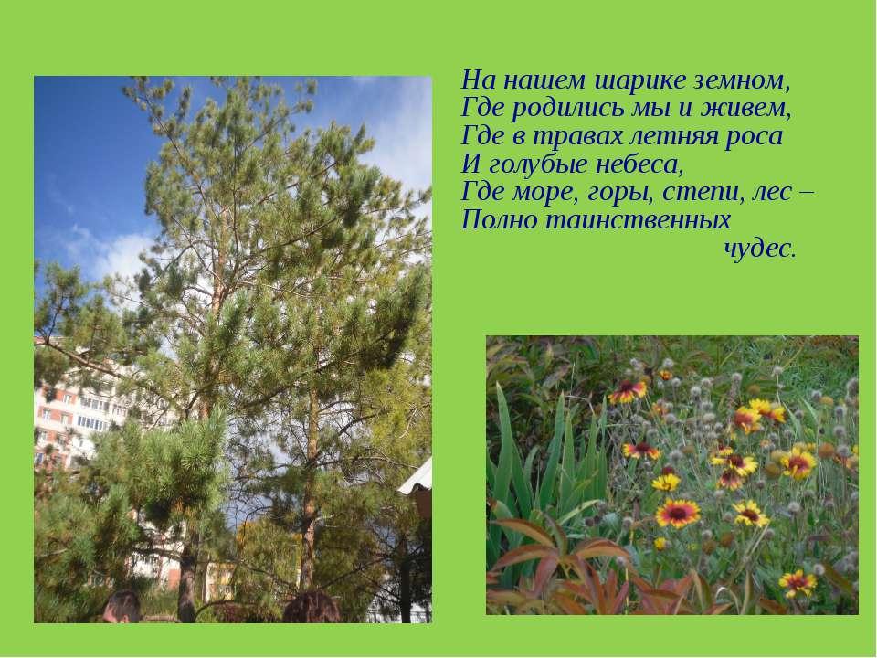 На нашем шарике земном, Где родились мы и живем, Где в травах летняя роса И г...