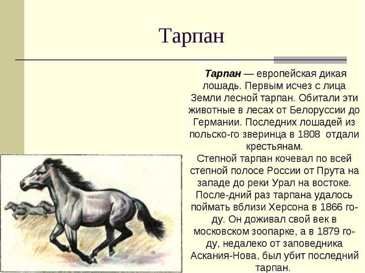 Тарпан Тарпан — европейская дикая лошадь. Первым исчез с лица Земли лесной та...